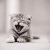 KittyK